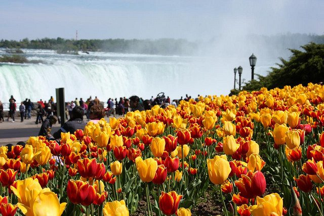 American Spring Break in Niagara Falls