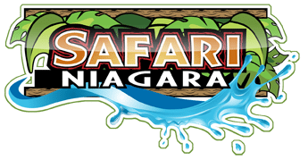 New white lion exhibit now open at Safari Niagara!