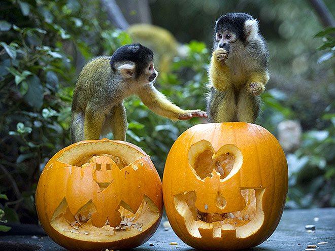 Niagara Falls Halloween contest