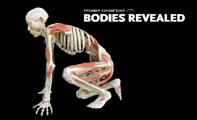 Bodies Revealed Exhibition is in Niagara Falls!