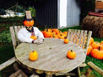 Niagara Pumpkin Farms