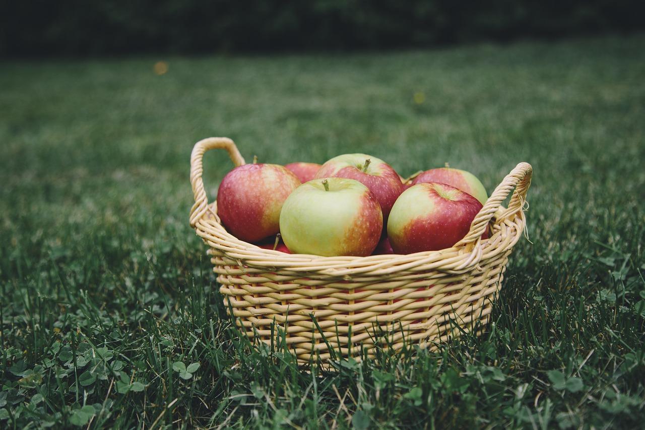 Where To Go For Fruit Picking In Niagara Niagara Falls Blog