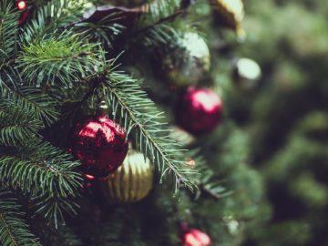Christmas Trees in Niagara