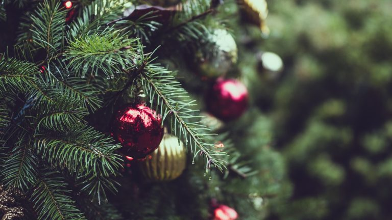 Where To Pick Real Christmas Trees In Niagara Niagara Falls Blog
