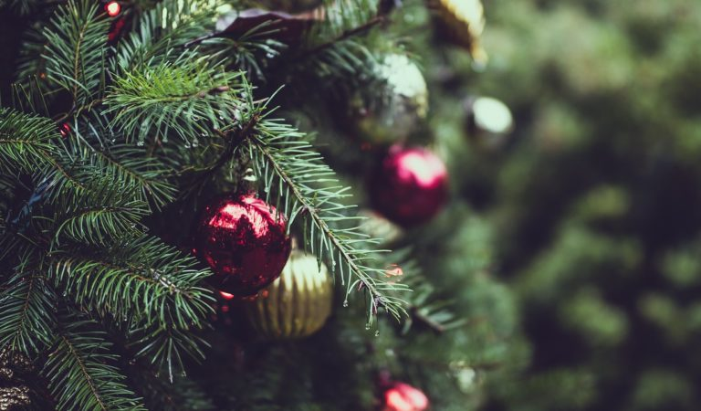 Where To Pick Real Christmas Trees In Niagara