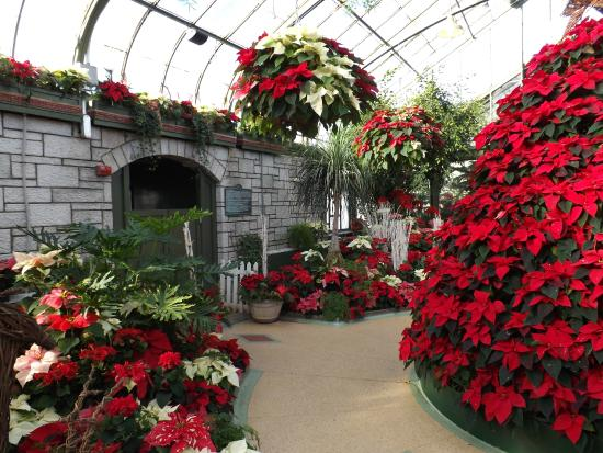thimngs to do in Niagara Falls in the Winter