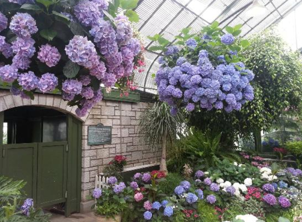 Floral Showhouse Hydrangea Display