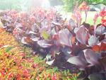 Flowers in Queen Victoria Park